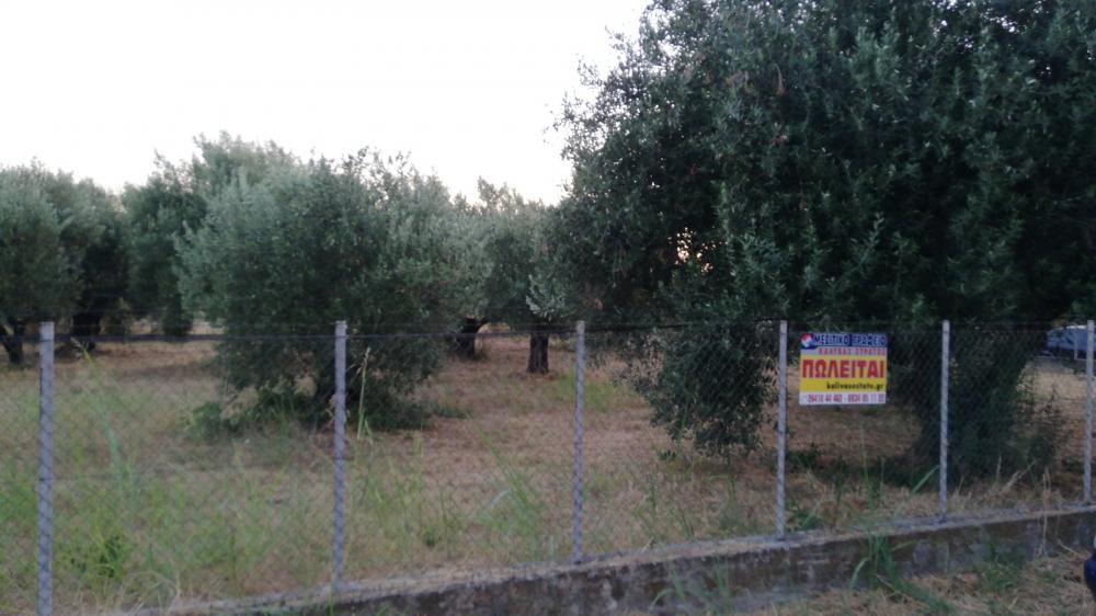 Πώληση, Οικόπεδο 730 τ.μ., Κρίκελλος, Αμφιλοχία, € 39.500