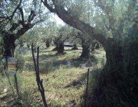 Πώληση, Οικόπεδο 693 τ.μ., Καμαρούλα, Αγρίνιο, € 70.000